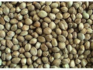 Organic Hemp Seeds 1 kg - Click Image to Close